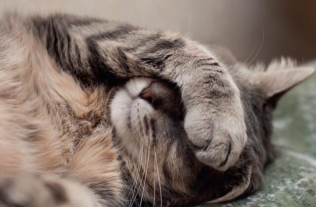 病気でつらそうに見える猫のイメージ写真