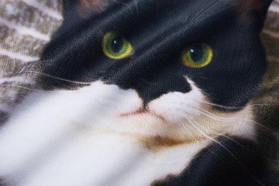 枕カバーにリアルにプリントされた人気猫「ギズモさん」