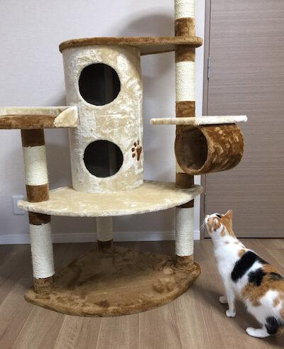 キャットタワーQQ80072のを発見した猫