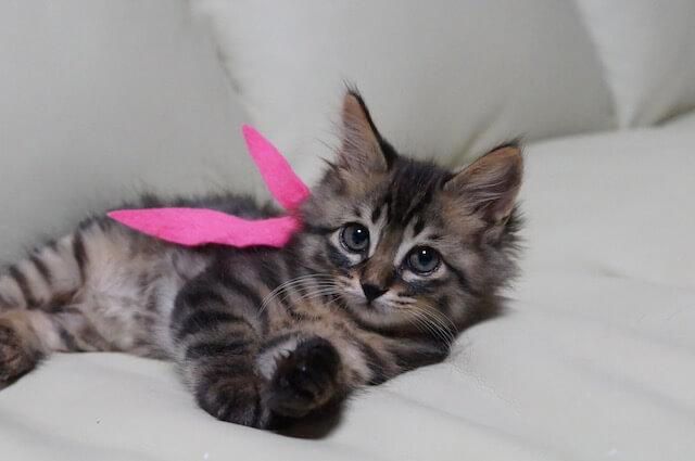 里親探しでピンクのスカーフを身につける子猫