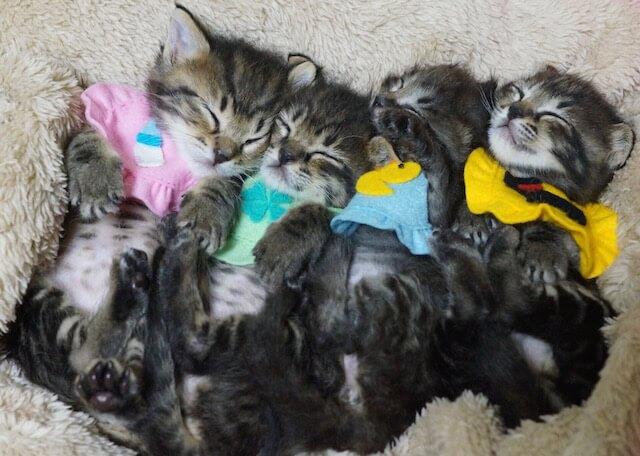 里親探しでスタイをまとった子猫たちの集合写真
