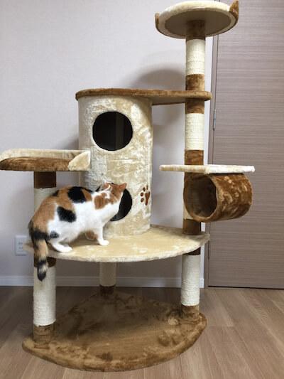 キャットタワーQQ80072の2階建てBOXをチェックする猫