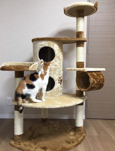 キャットタワーQQ80072の2階建てBOXの上段をチェックする猫