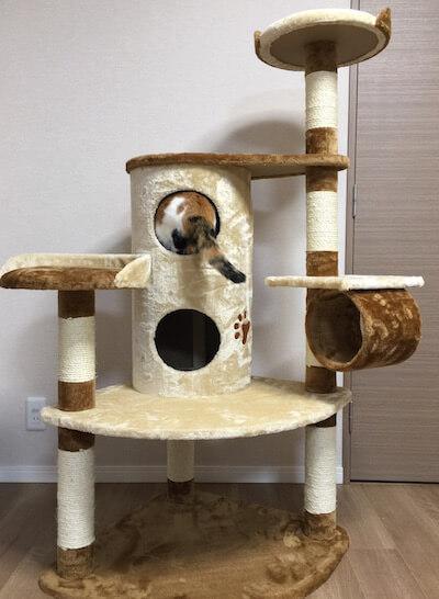キャットタワーQQ80072の2階建てBOXに入る猫