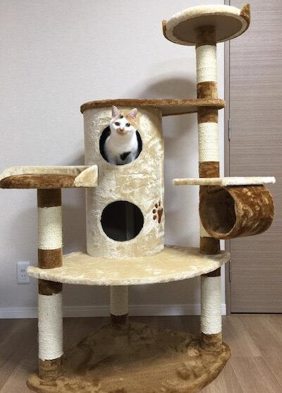 キャットタワーQQ80072の2階建てBOXから顔を覗かせる猫