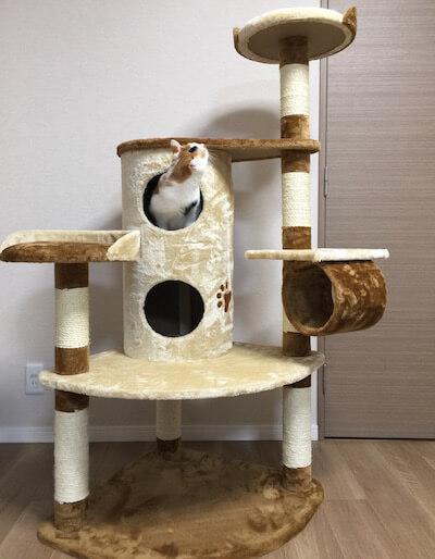 キャットタワーQQ80072の2階建てBOXからてっぺんを窺う猫