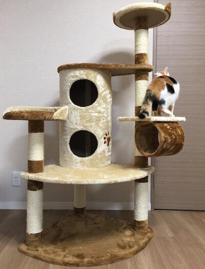 キャットタワーQQ80072のてっぺんに向かう猫