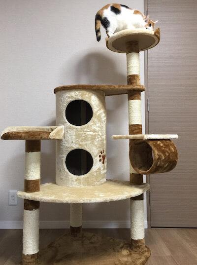 キャットタワーQQ80072のてっぺんに到着した猫