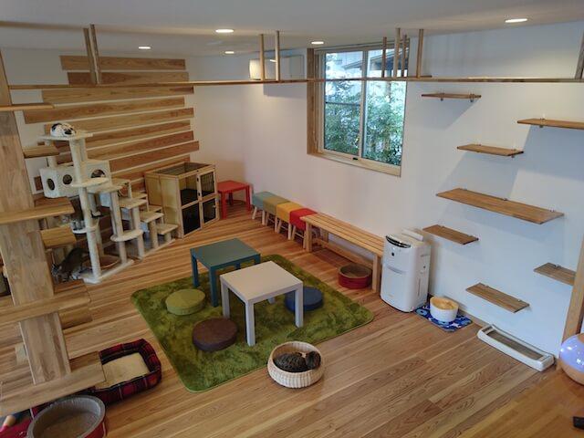 猫カフェ 「ごろーにゃ」の室内風景