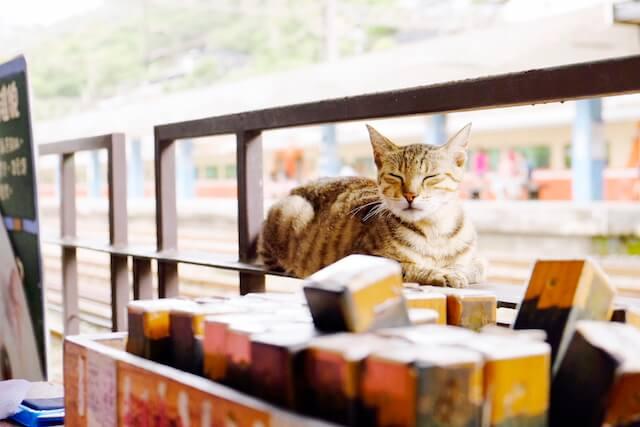 台湾の猫村、侯硐(ホウトン)のネコ