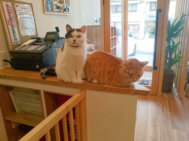 レジカウンターを占拠する猫たち