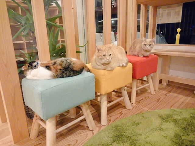 猫カフェ「ごろーにゃ」で寛ぐ猫たち