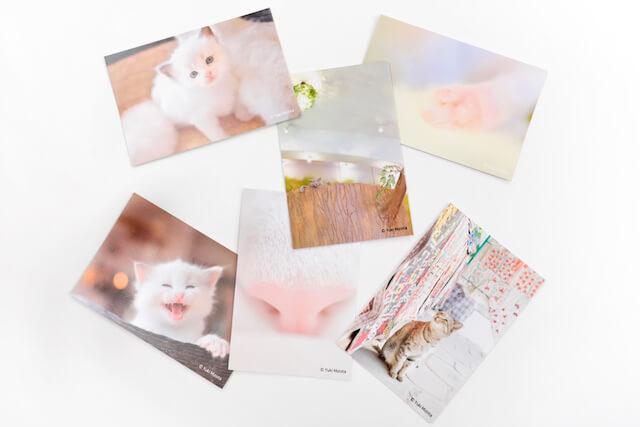 ミゾタユキ氏の猫写真ポストカード