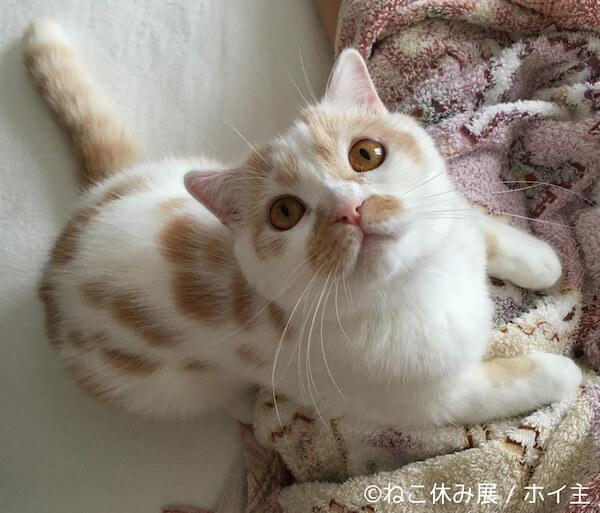 ちくわ柄の人気猫ホイップ