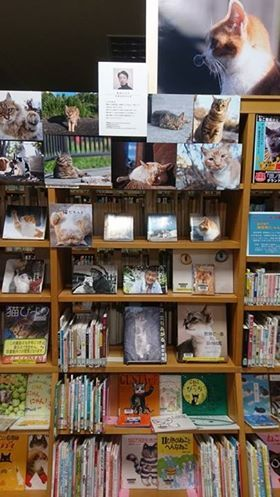 猫ノ図書館で展示中、あおいとりさんのパネル展