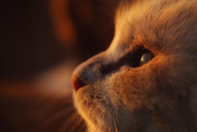 大佛次郎記念館の「ねこ写真展2017」で展示される猫の写真2