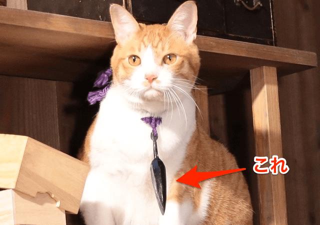 猫忍の主演猫・金時が身に付けている首輪のレプリカがもらえる