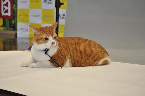 猫忍の主役、茶白猫の金時