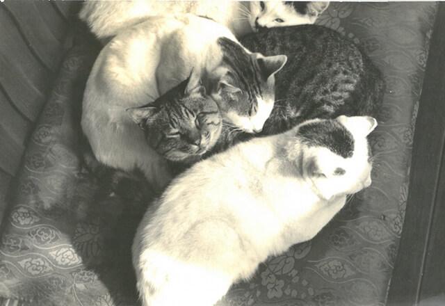 大佛次郎が1937年頃撮影した猫の写真