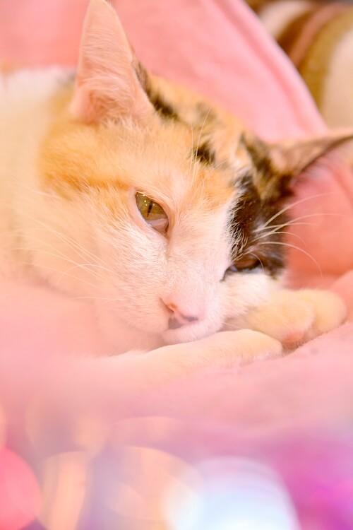 ミゾタユキさんが撮影した猫の写真