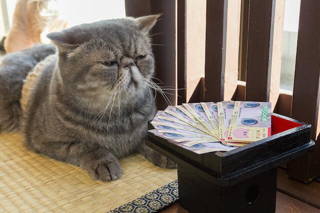 グリーンにゃんぼ!宝くじを目の前にする猫