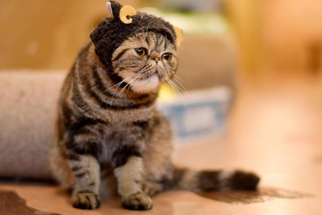 ミゾタユキさんが撮影したかぶりものをした猫の写真