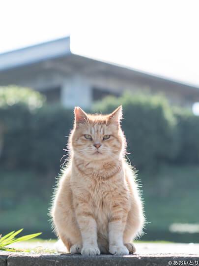 猫ノ図書館で展示される、あおいとりさんの猫写真4