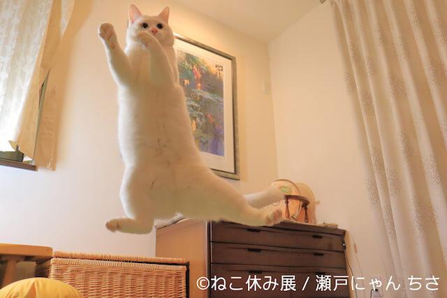 無重力猫の「ミルコ」