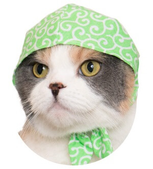 猫のかぶりもの、若草色×唐草模様