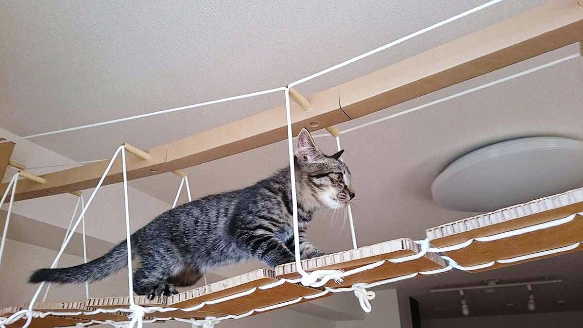 吊り橋のキャットウォークを歩く猫