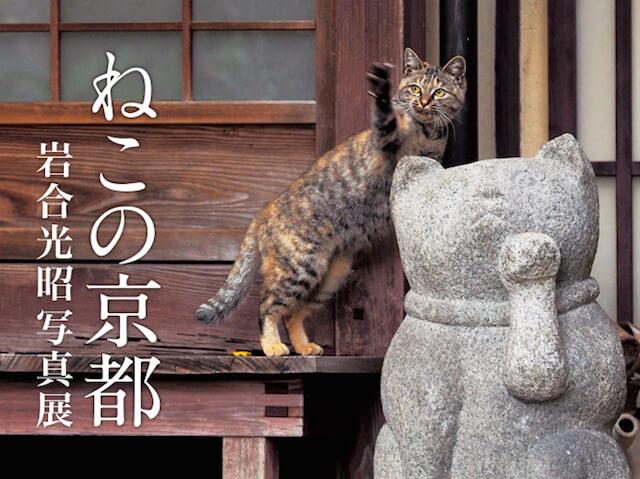 岩合光昭さんの新作写真展&写真集「ねこの京都」