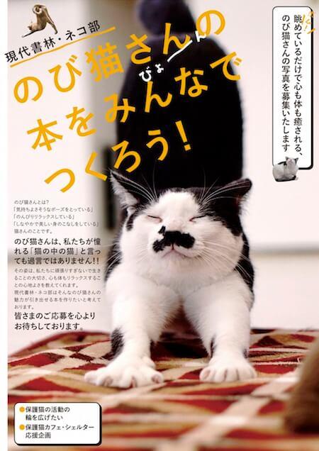 現代書林・ネコ部が募集している、猫ストレッチ・のび猫の写真