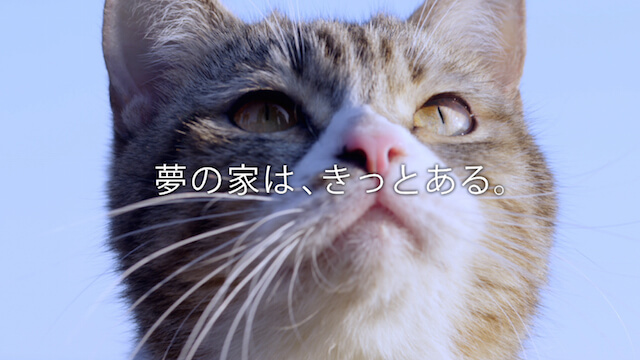 デザイニャーズハウスのモデル猫