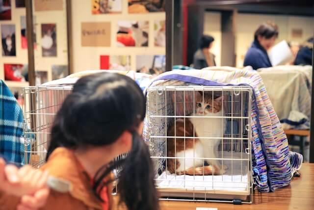 譲渡会に参加する保護猫