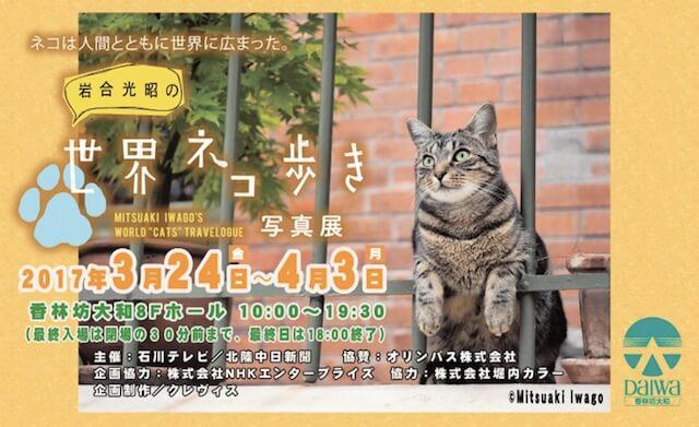 百貨店「大和 香林坊店」で開催される写真展「岩合光昭の世界ネコ歩き」