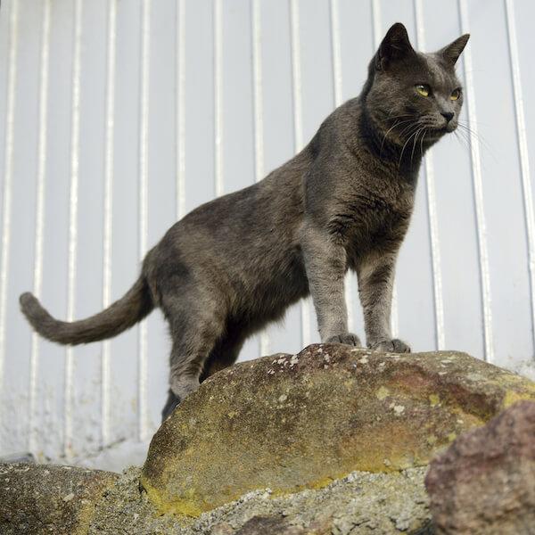 南幅俊輔さんの写真作品、たくましい表情の猫