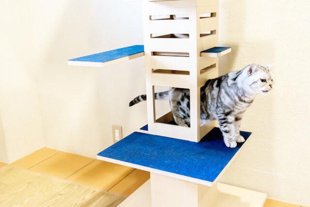 キャットタワー「necobacoT」のインディゴカラー(藍色)の穴をくぐる猫