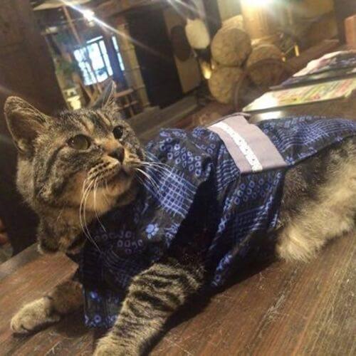 湯西川温泉 桓武平氏ゆかりの宿 平家の庄の看板猫、トラヒゲ