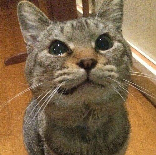伊東温泉 愛犬と泊まれる宿アップルシードの看板猫、せら