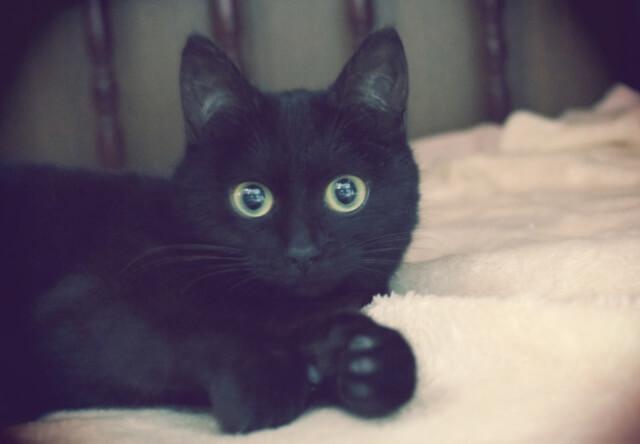 猫もゲストも嬉しい保護猫シェルター付きのゲストハウスが登場