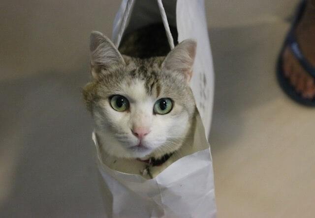 猫あるある写真
