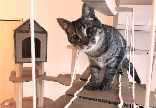 猫が遊べる組み立て式の吊り橋キャットウォーク「FitTree(フィットツリー)」アプリで動く玩具付き