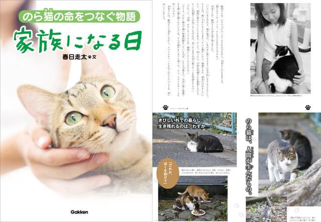 ノンフィクション児童書、のら猫の命をつなぐ物語「家族になる日」