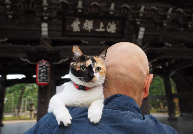岩合光昭さんの新作写真展「ねこの京都」写真集もでるニャ