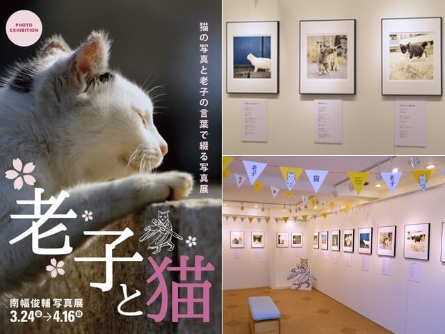 外猫の写真×老子の言葉がコラボした癒やしの写真展が開催中