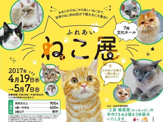 世界中の珍しい猫と触れ合える「ふれあい ねこ展」が下関で開催