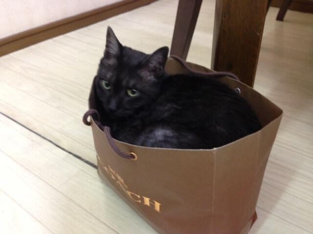 ホテル千望荘の看板猫、クッピー
