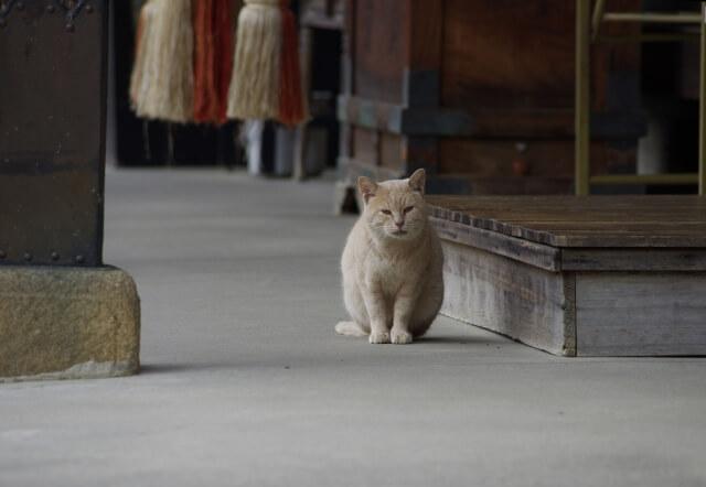 お寺で飼われている猫のイメージ