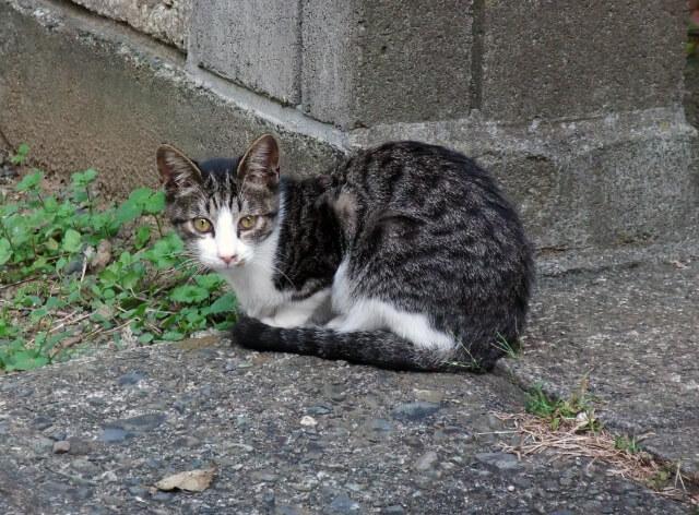 外で見かけた猫の写真