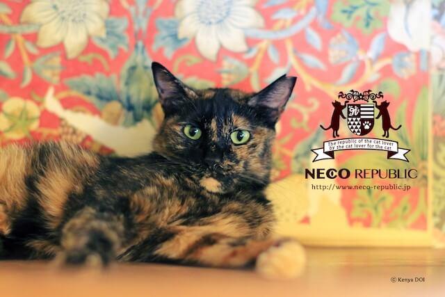 保護猫カフェ「ネコリパブリック」